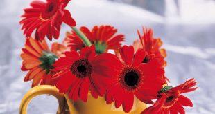 بالصور زهور جميلة , صور جديدة لاجمل زهور في العالم 216 17 310x165
