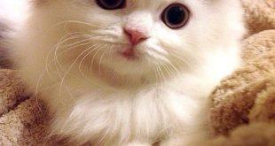 صور صور قطط جميلة , اروع الصور لقطط كيوت