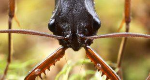 صورة معلومات عن النمل , اهم معلومه عن النمل