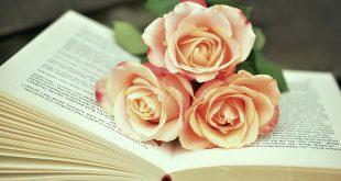 صور صور ورد حلوه , اشكال ورود جذابه وباقات من الورد للمناسبات