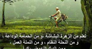 بالصور صور جميلة عن الحياة , حكم و امثال معبره عن الحياه و العالم حولنا 5555 12 310x165