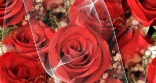 صور احلى صور ورد , اروع البوستات لازهار جميلة