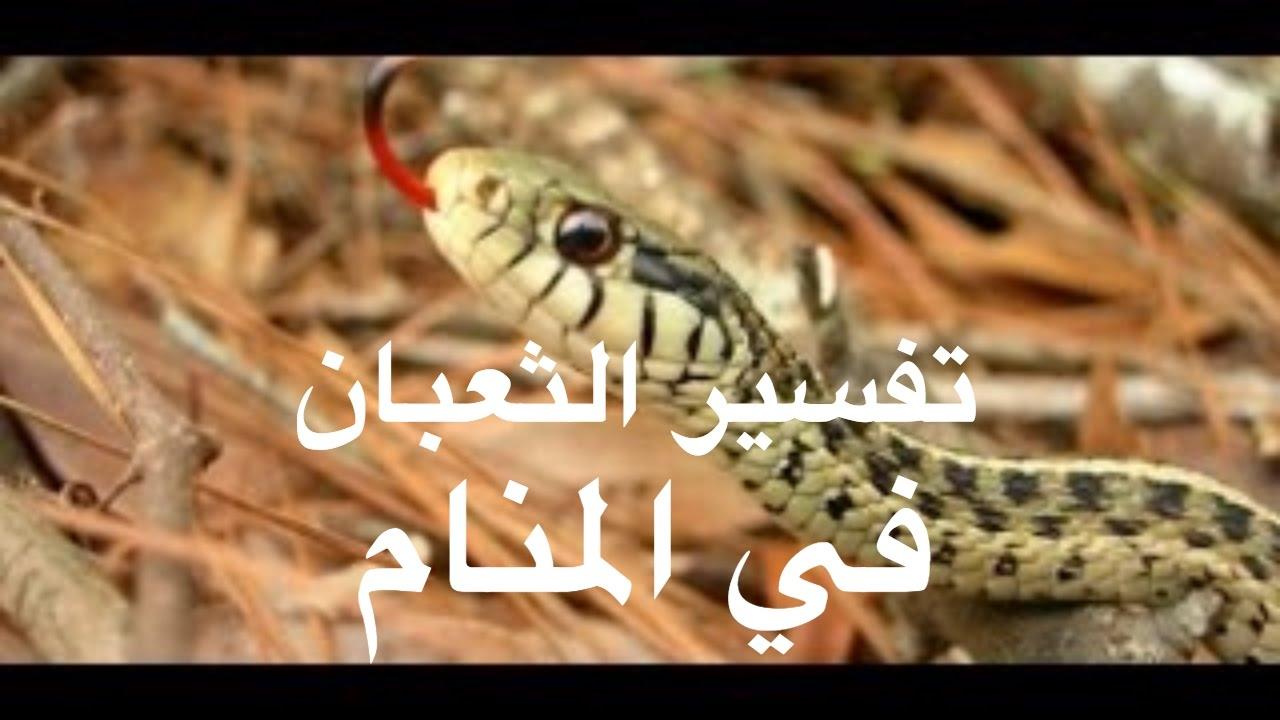 بالصور رؤية الثعبان في المنام وقتله , تفسير حلم الثعبان وقتله 2568 6