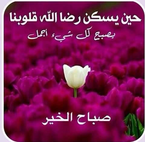 بالصور صور صباح الخير حبيبي , كلمة صباح الخير للاحباب فى صورة 4969 4