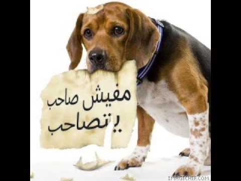 بالصور بالصور خيانه الصديق , صور عن خيانة الصاحب 63 7