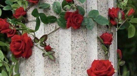 بالصور ورود الحب , اجمل الصور الرومانسية ورود 6507 1