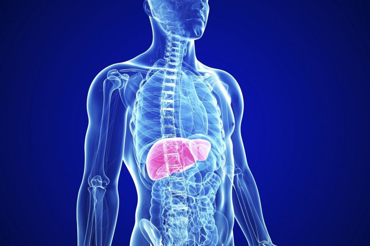 بالصور علاج تنظيف الكبد من السموم , كيف تنظف كبدك من السموم 12807 1