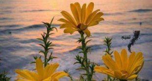 صور اجمل صور مساء الخير , بغروب الشمس يبدء المساء وليل التمني