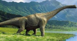 صورة معلومات عن الديناصورات , الديناصور اشهر واضخم كائنات كوكب الارض