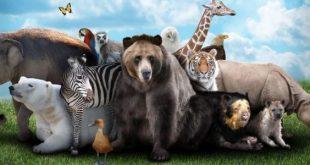 صور صور حيوانات , تعرف علي العديد من الحيوانات
