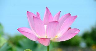 صور صور ورد جديد , روائح الورد الجميلة