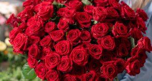 صور بوكيه ورد كبير , بوكيهات الورد و تنسيق الورد لمن تحبهم