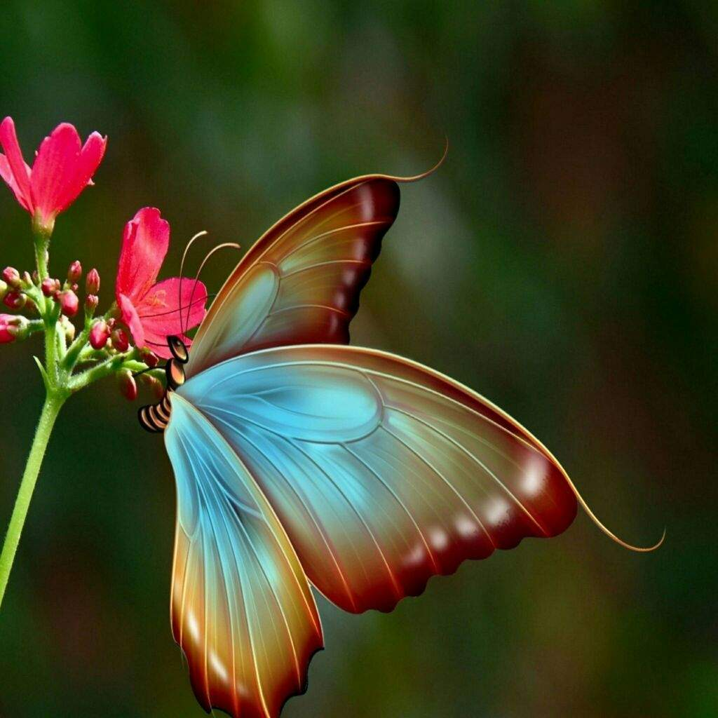 صور اجمل صور فرشات , فرشات جميله ملونه