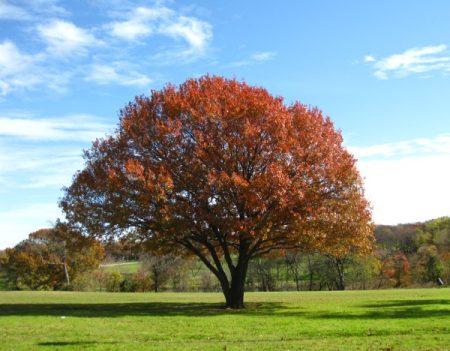 صور اشجار صور اشجار جميلة وخلابة رمزيات