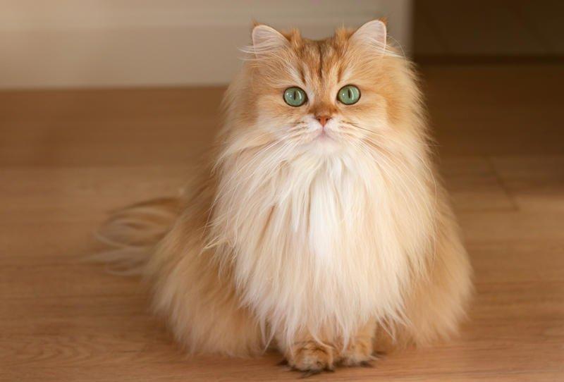 صورة صور قطط كيوت , صور قطط جميلة لعشاق القطط