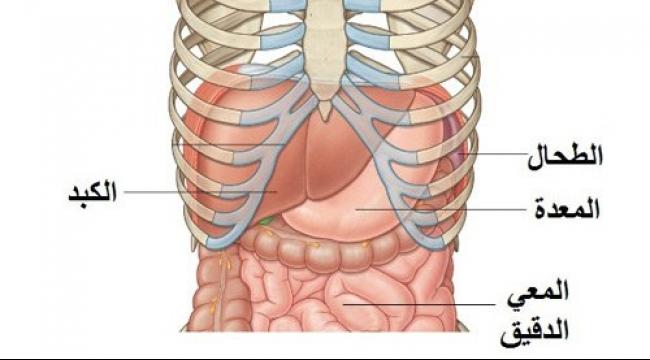 صورة صور جسم الانسان , تركيب جسم الانسان بالتفصيل
