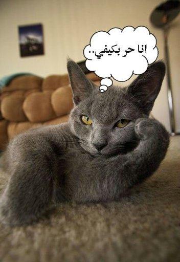 صورة صور مضحكة فيس بوك , احلي الصور المضحكة للفيس بوك