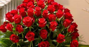 صور اجمل صور الورد , اجمل صور الورد و اشكاله الرائعة