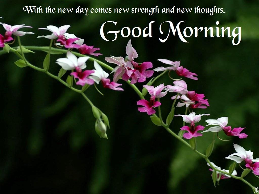 صورة احلى صور صباح الخير , صور صباح الخير لحبيبك