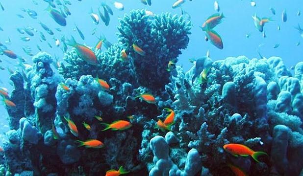 صورة اجمل صور اسماك , اسماك البحر الاحمر المتنوعه