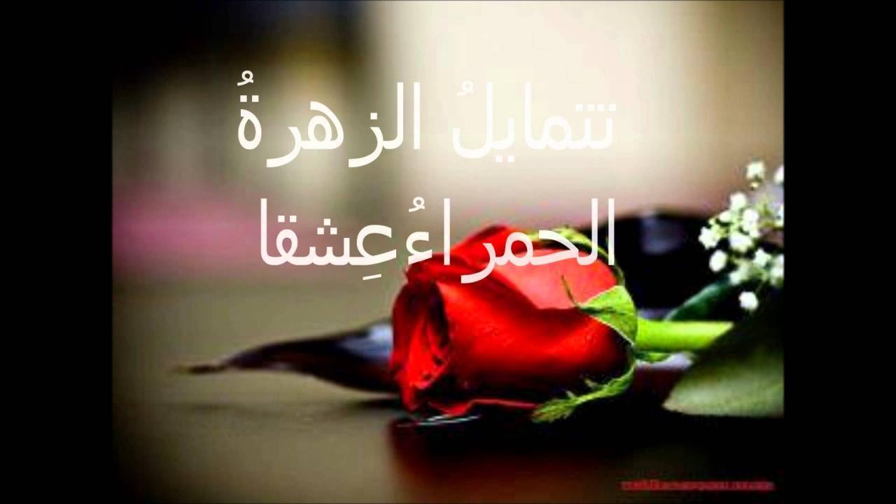صورة عبارات عن الورد , اجمل ماقيل عن الوان الورد