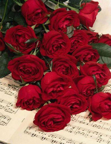 صور صور اجمل الورود , خلفيات ورود طبيعيه
