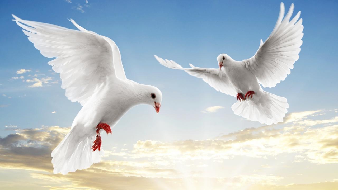 صور صور عن السلام , صور معبرة عن السلام