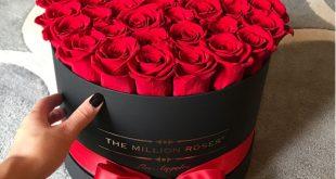 صورة صور الورد , اشكال وانواع الورد