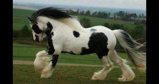 صورة اجمل حصان في العالم , تعرف على اروع احصنة 2019