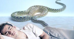 صورة تفسير حلم الثعابين في البيت , للثعابين مؤشر غير جيد فى المنام