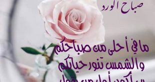 صباح الورد حبيبي