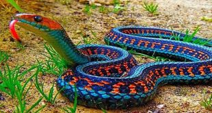 انواع الثعابين